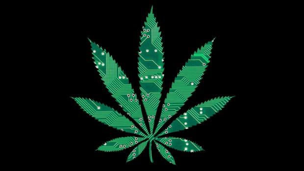 Cannabis as a launch pad
